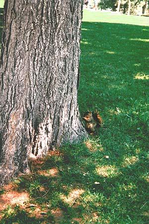 丹佛市–生命盎然的森林